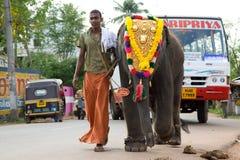 Een jonge mahout leidt een babyolifant stock afbeeldingen