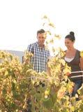Een jonge man en een vrouw die zich in winelands bevinden Stock Fotografie