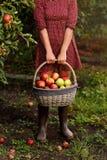 Een jonge mand van de vrouwenholding met appelen Stock Afbeelding