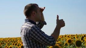 Een jonge mannelijke landbouwer bevindt zich op een zonnebloemgebied op een zonnige de zomerdag en inspecteert het gewas voor ber stock videobeelden