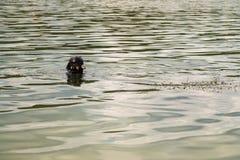 Een jonge mens in een kostuum voor het duiken Royalty-vrije Stock Foto's
