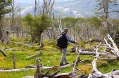 Een jonge mens loopt rond de boomstammen van bomen Royalty-vrije Stock Foto's