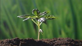 Een jonge mooie hand plant een boom in een romantische natuurlijke en magische atmosfeer stock videobeelden