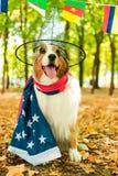 Een jonge speelse hond van een Australische herder in een Park in het de herfstbos voert bevelen uit gekleed in de Amerikaan royalty-vrije stock foto's