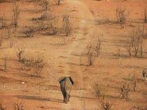 Een jonge stierenolifant die op een doorstane weg lopen royalty-vrije stock afbeeldingen