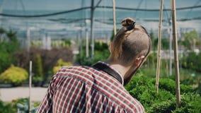 Een jonge tuinman met een baard, gaat naar de tuin en inspecteert de installaties Vlotte motiecamera stock video