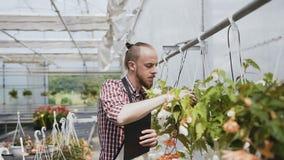 Een jonge tuinman met een baard gekleed in een schort houdt een rekening van sierplanten bij Daglicht natuurlijk licht stock videobeelden