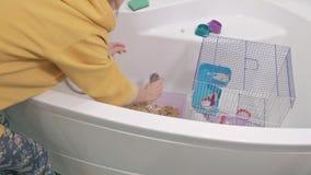 Een jonge vrouw behandelt een huisdier, wast en maakt de kooi in de badkamers schoon, verwijdert vuil zaagsel, knaagdier, rat stock videobeelden