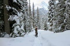Een jonge vrouw die door bossen van Eilandmeer snowshoeing in Fernie, Brits Colombia, Canada royalty-vrije stock fotografie