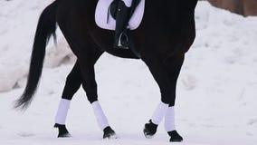 Een jonge vrouw die een paard in een dorp berijden Een paard die op een sneeuwgrond lopen stock footage