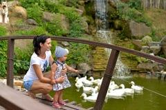 Een jonge vrouw met een kleine dochter op de brug in het Park die op zwanen het drijven letten stock foto