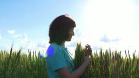 Een jonge vrouw neemt greep van tarwearen Cultuur van tarwe stock videobeelden