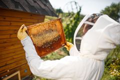Een jonge vrouwelijke imker in een professioneel imkerkostuum, inspecteert een houten kader die met honingraten het houden in haa stock foto