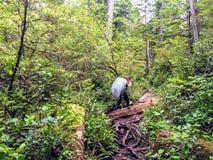 Een jonge vrouwelijke wandelaar die haar manier maken door de bossen van het eiland van Vancouver op de beroemde stijging van de  stock fotografie