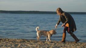 Een jonge vrouwenlooppas, spel met een bruine hond Labrador op het strand op de bank van de rivier De lente stock videobeelden
