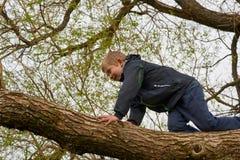 Een Jongen beklimt Boom Stock Foto's