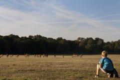 Een jongen let op een kudde van deers in het Park van Richmond Royalty-vrije Stock Foto