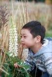 Een jongen ruikt de lupinebloem Royalty-vrije Stock Fotografie