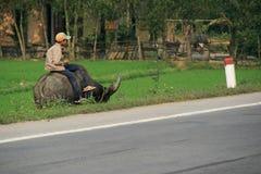 Een jongen wordt gezeten op de rug van een buffel bij de rand van een weg (Vietnam) Royalty-vrije Stock Afbeeldingen