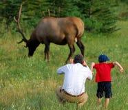 Een jongen, zijn papa, en een eland royalty-vrije stock foto's