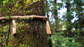 een kabel op de boomstam royalty-vrije stock foto's