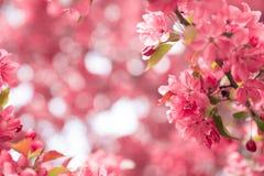 Een kader van bloemen Royalty-vrije Stock Foto's