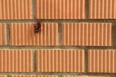 Een Kakkerlak blijft op oranje bakstenen muur Royalty-vrije Stock Afbeeldingen