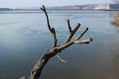 Een kale boom Stock Foto's
