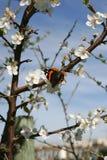 Een kalme zonnige de lentedag stock foto