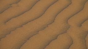 Een kameel die in een woestijn lopen stock videobeelden