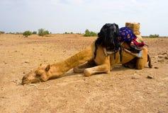 Een kameel in Woestijn, Jaisalmer, India Royalty-vrije Stock Fotografie