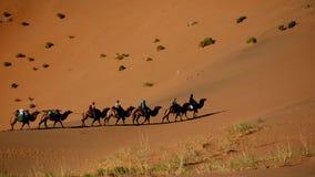 Een kameeltrein in de woestijn van Gobi Stock Foto