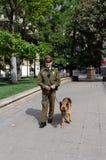 Een karabiner-hond op de straat van Santiago Stock Foto's