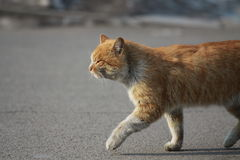 Een kat Stock Fotografie
