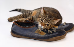 Een kat Stock Foto's