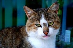 Een kat Royalty-vrije Stock Fotografie