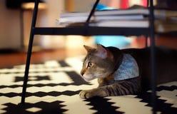 Een kat stock afbeeldingen