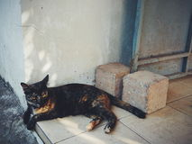 Een kat Royalty-vrije Stock Afbeeldingen
