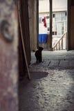 Een kat royalty-vrije stock afbeelding