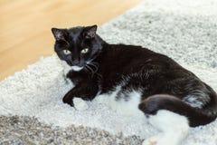 Een kat als free-running huisdier Stock Afbeeldingen