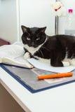Een kat als free-running huisdier Royalty-vrije Stock Fotografie