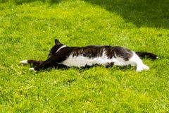Een kat als free-running huisdier Stock Foto