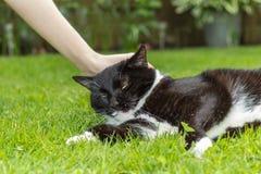 Een kat als free-running huisdier Royalty-vrije Stock Afbeeldingen