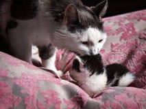 Een kat behandelt haar baby Royalty-vrije Stock Afbeeldingen