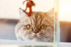Een kat bekijkt vissen met honger royalty-vrije stock afbeeldingen