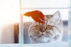 Een kat bekijkt vissen met honger stock afbeelding