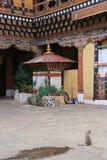 Een kat bevindt zich in de binnenplaats van dzong van Paro (Bhutan) Royalty-vrije Stock Afbeelding