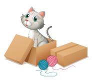 Een kat binnen de doos Stock Foto