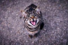 Een kat in een boze stituation royalty-vrije stock afbeeldingen