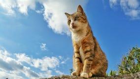 Een kat in de blauwe hemel Stock Fotografie